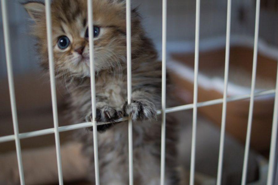 Животное следует посадить в клетку