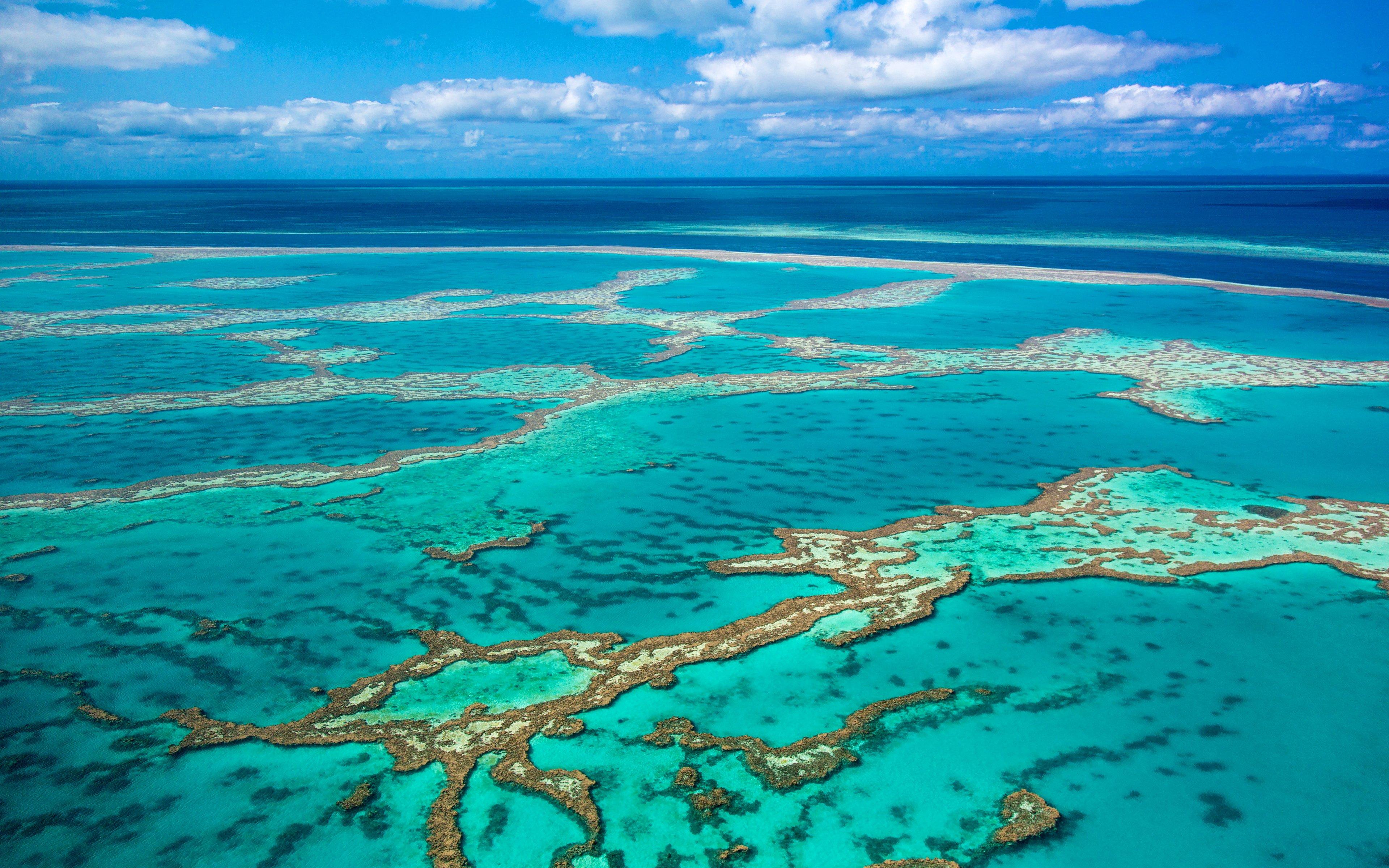 Фото Кораллового моря
