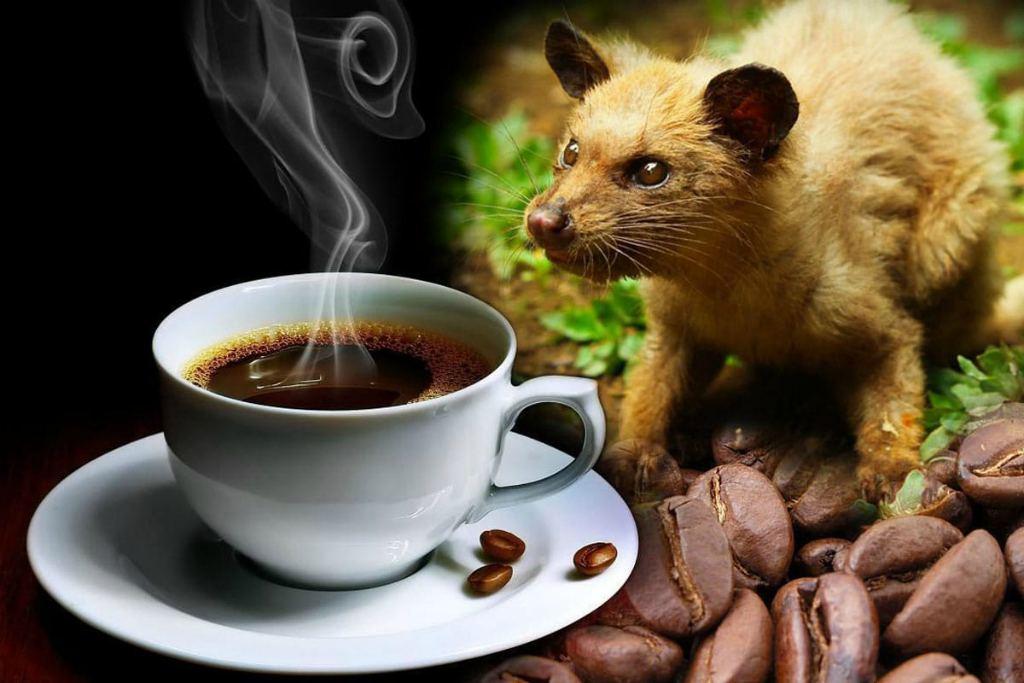 Самый дорогой кофе Лювак