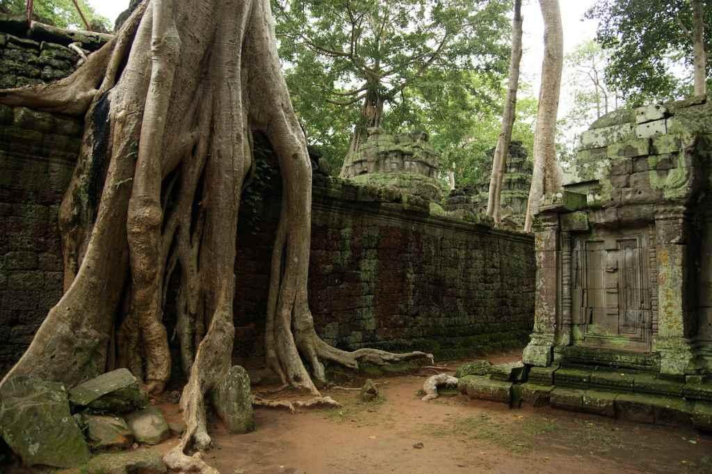 Храмовые деревья