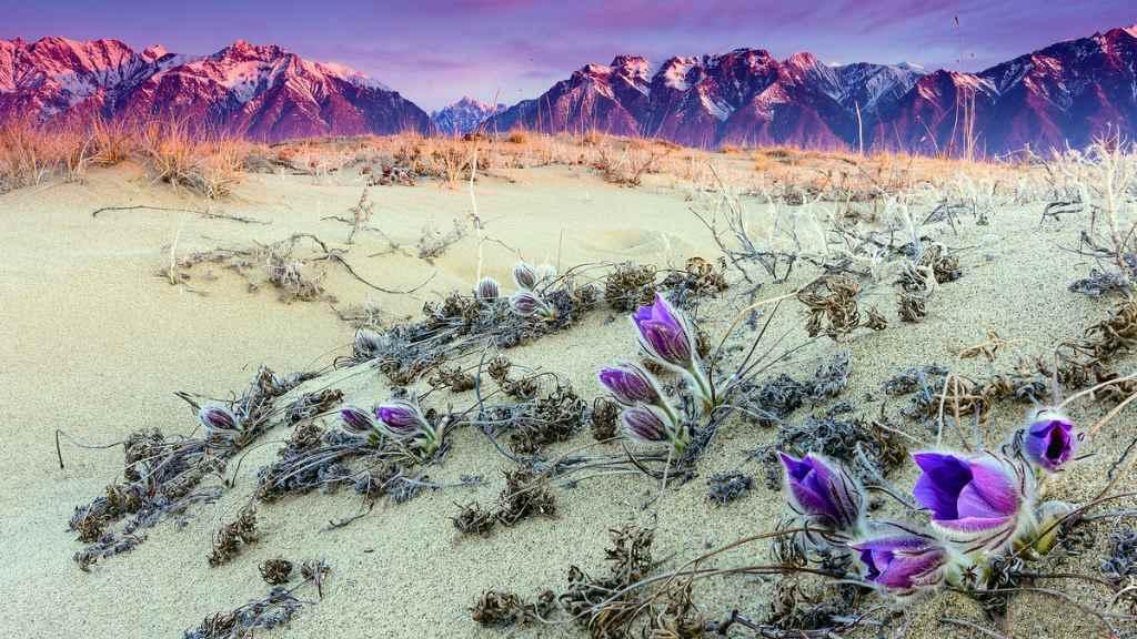 Сибирская пустыня весной