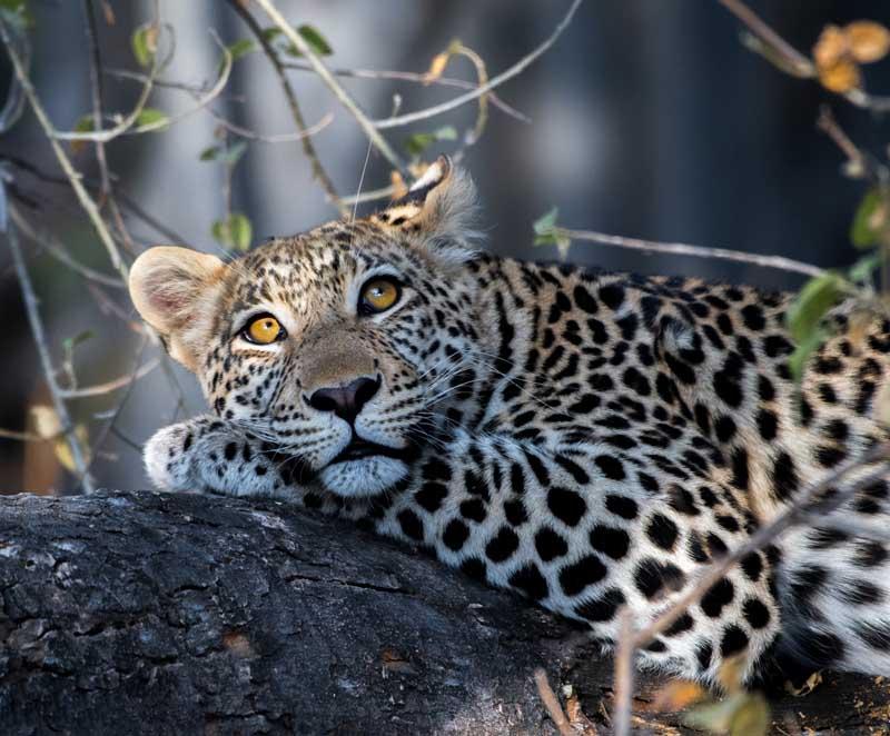 """Что представляет собой заповедник """"Земля леопарда"""""""