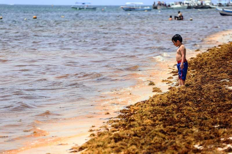 ситуация с распространением водорослей на курортах Мексики