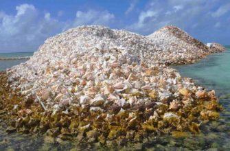 Ракушечный остров в Карибском море