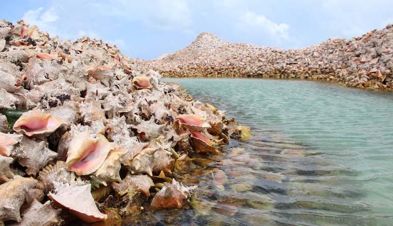 Где находится остров Конч, и как он образовался
