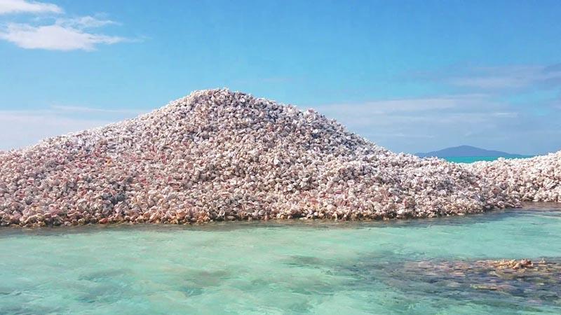 Растущий остров из ракушек