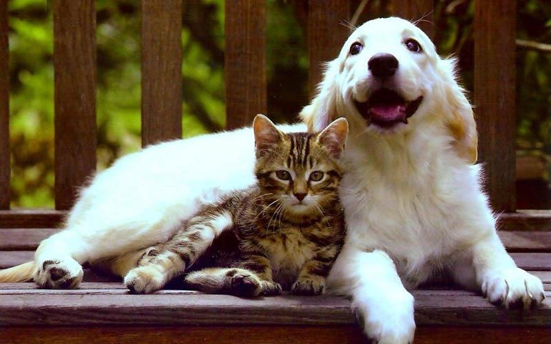 Где больше любят кошек, а где собак