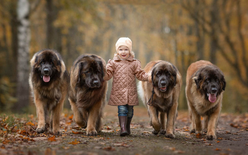 Страны мира, в которых больше любят собак