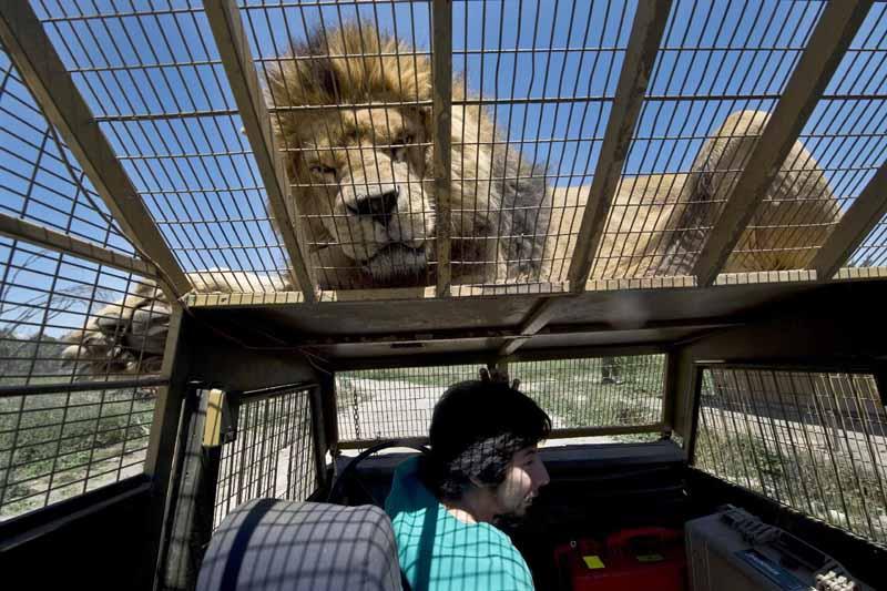 Чем знаменит новозеландский зоопарк Орана