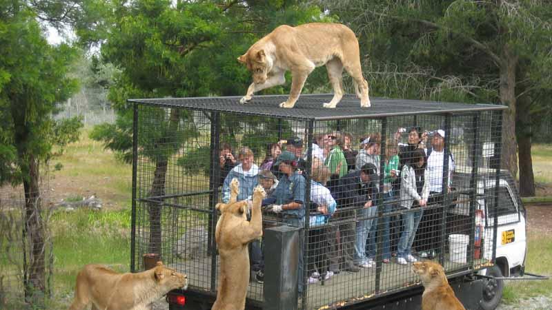 Новозеландский зоопарк