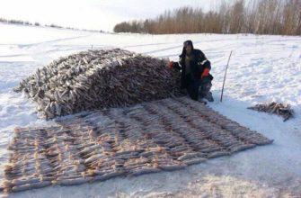 Рыба как топливо для печей у северных народов