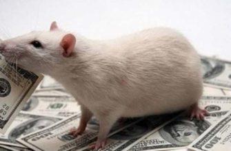 Как крысы съели половину валютного фонда ОАЭ