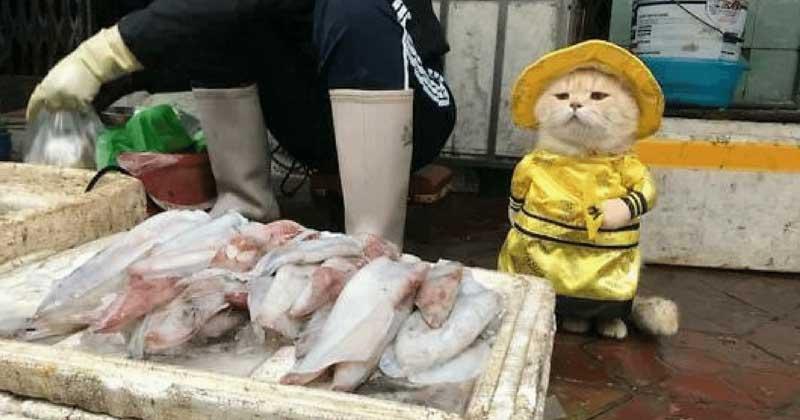 Кот-собака, торгующий рыбой во Вьетнаме