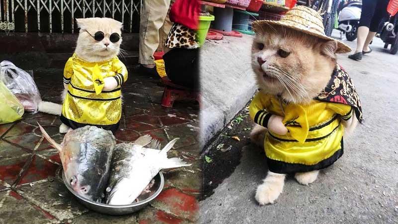 С виду Чо может показаться самым обычным котом — рыжим, пушистым