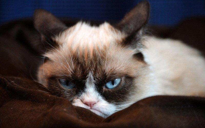 Что это за странный город, в котором кошек держать нельзя