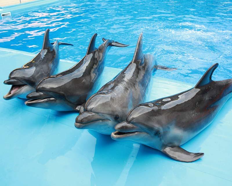 Как относятся к дельфинам в России?