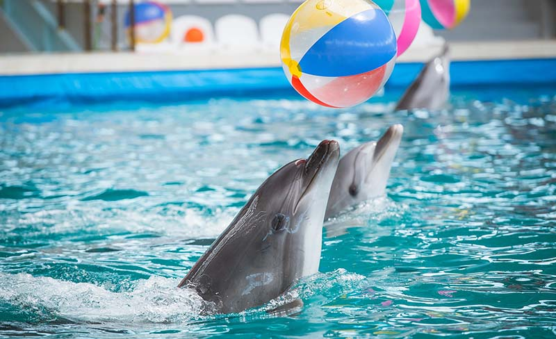 Дельфины — личности!