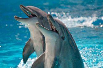 Индия считает дельфинов уникальными личностями и запрещает дельфинарии