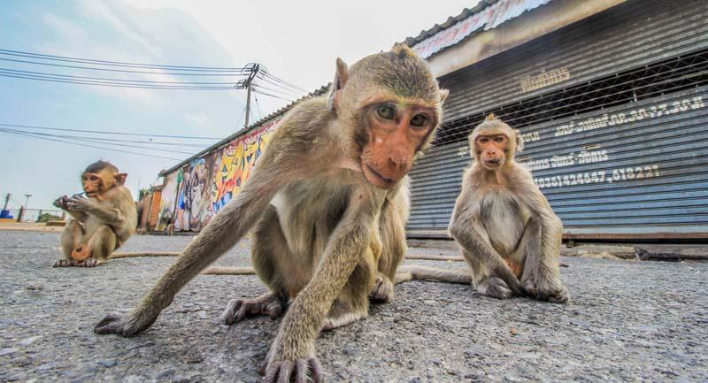 Бесхозных животных в Индии очень много