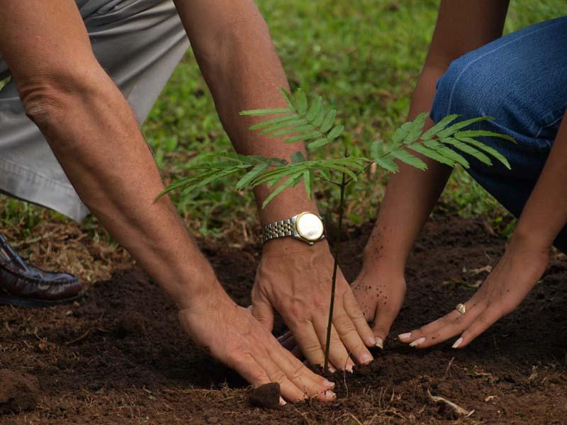 На острове Ява прежде, чем развестись, пара должна посадить 5 деревьев и убедиться, что они прижились