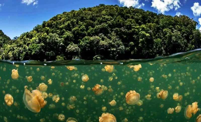 Тропический рай с медузами Палау
