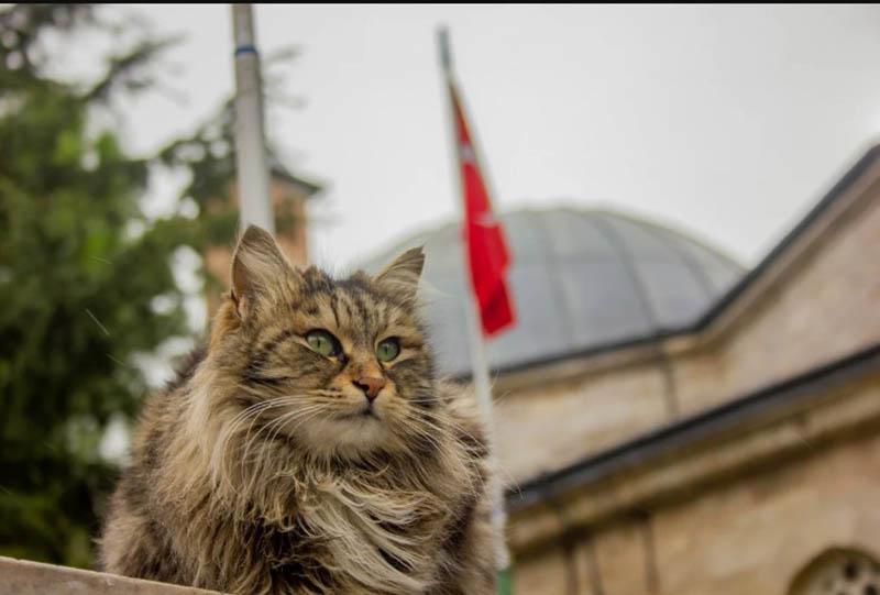 Кошка — друг человека в Турции