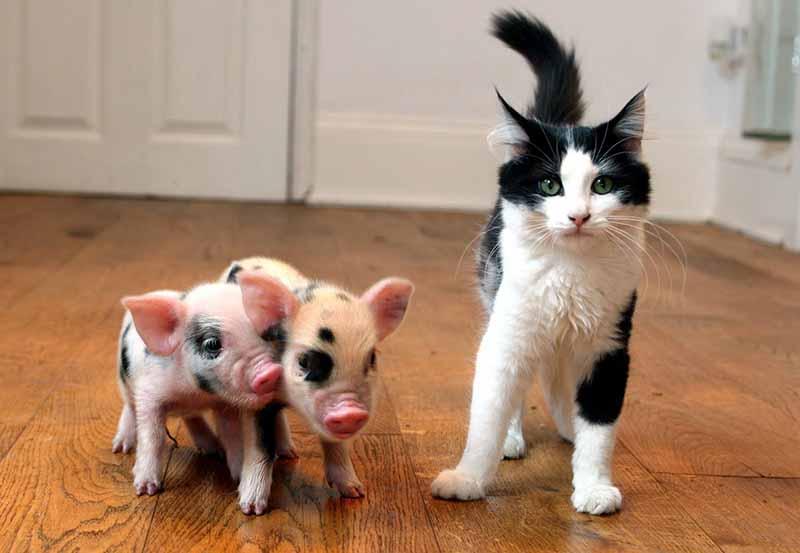 Налоги введены не просто так, они необходимы для того, чтобы власти могли иметь дополнительные запасы финансов для удовлетворения нужд и потребностей опять же животных