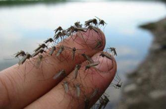 Правда ли, что в Исландии не живут комары