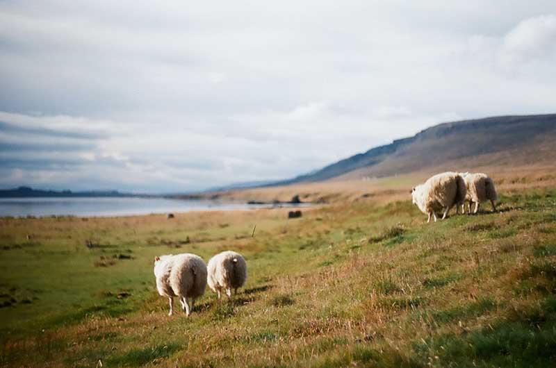 У туристов Исландия была бы очень популярной, если бы не находилась на окраине цивилизованного мира