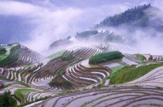 Рисовые террасы в Японии