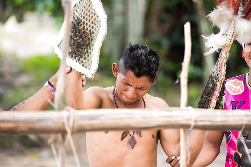Обряд повторяется 20 раз с разницей в несколько месяцев, только после этого мальчик станет настоящим взрослым мужчиной в племени Сатере-маве.