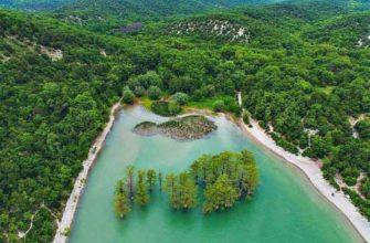 Кипарисы в центре озера Сукко