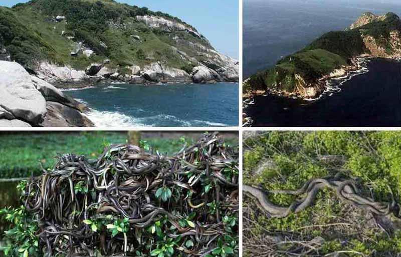Остров Кеймада-Гранди Попытки отвоевать остров у змей