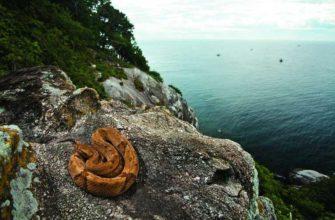 Самый опасный остров Кеймада-Гранди