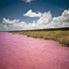 За счет чего Малиновое озеро в Алтайском крае имеет розовый цвет