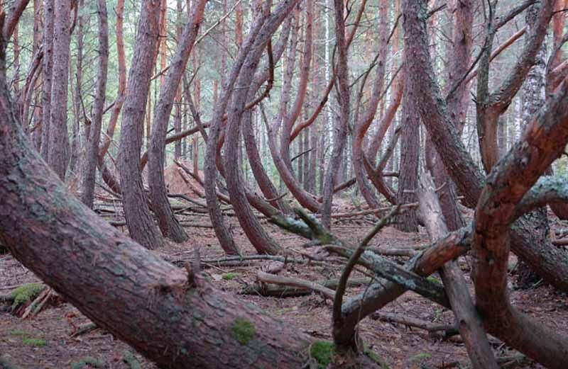 лес в Шиловском районе