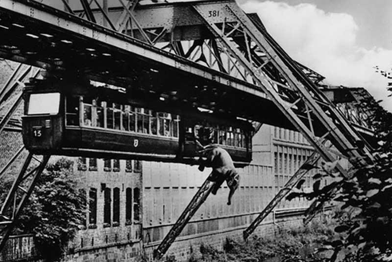 А летом 1950 года в Вуппертале произошло очень необычное дорожно-транспортное происшествие с участием подвесной дороги.