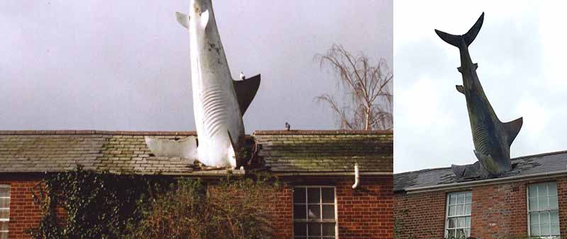 Что символизирует акула на крыше?