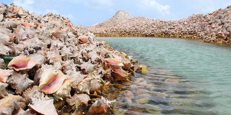 Остров на Карибах, который полностью состоит из раковин