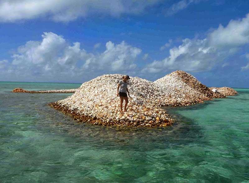 Более 8 сотен лет рыбаки с острова Северная Анегада выбрасывают в море пустые раковины моллюсков.